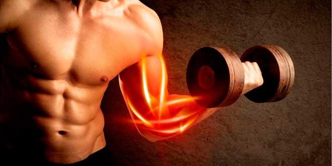 Regeneración muscular después del ejercicio - Fit Soul